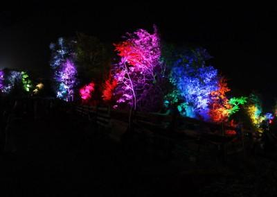 SJP: Festival Tree Uplighting Lockn 2014 Relix Stage Treeline