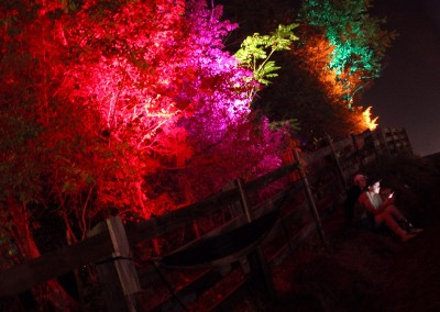 SJP: Festival tree uplighting Lockn 2014