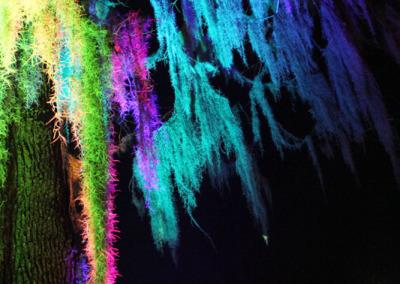 Aura Music Festival 2014: Sparkling Moss