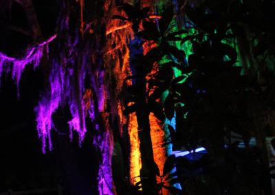 Aura Music Festival 2014: Tree Silhouettes
