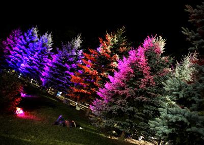 Peach Festival 2014: Treeline