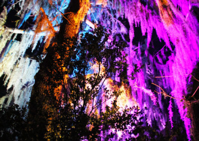 Aura Music Festival 2014: Tree Uplighting