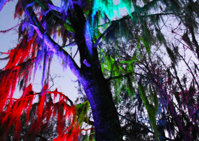 Aura Music Festival 2014: Rainbow Trees