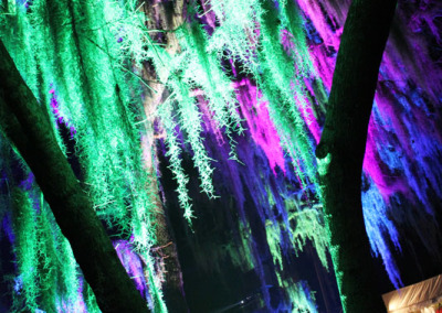 Aura Music Festival 2014: Green Moss
