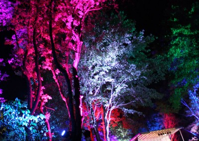 SJP: Tree Uplighting and festival decor Lockn 2014 Triangle Stage
