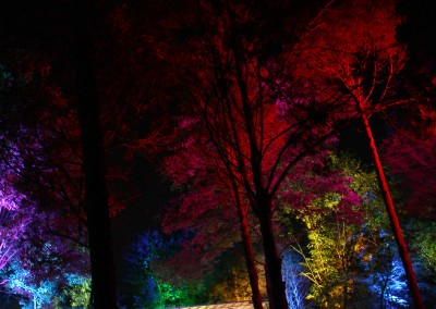 Lockn' Festival 2014 Triangle Stage Tree Uplighting