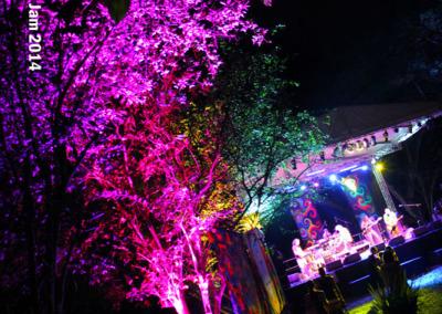 coloured-jungle