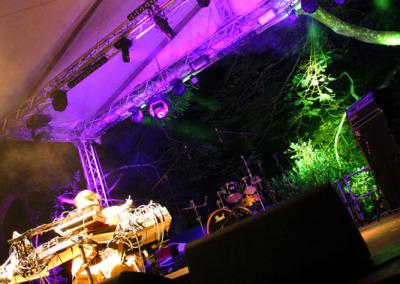 zd-jungle2
