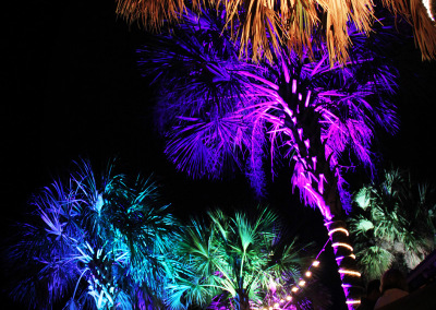No Name Palm Tree Uplighting