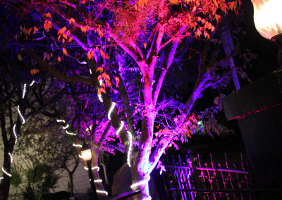 Colored Trees at Spy