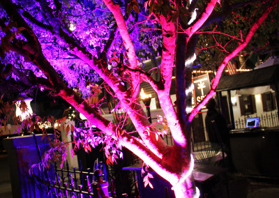 Spy - Coloured Trees
