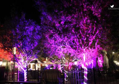 Spy - Tree Uplighting