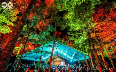 SJP Productions Creates Forest Of Light At LOCKN' Festival With ChamSys